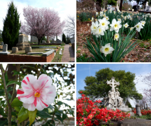 Morning at Oakland Cemetery