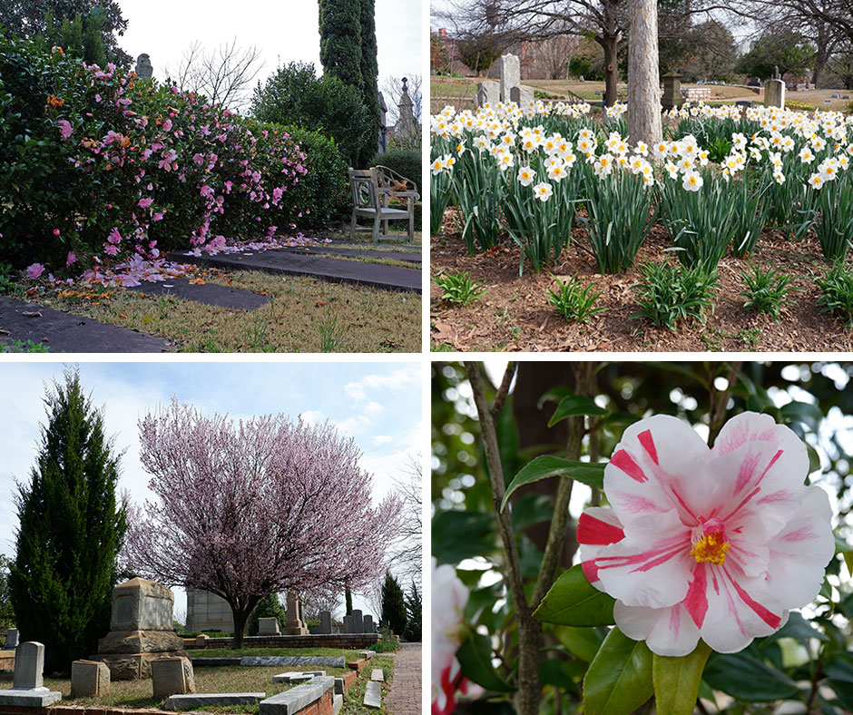 Oakland Cemetery Collage